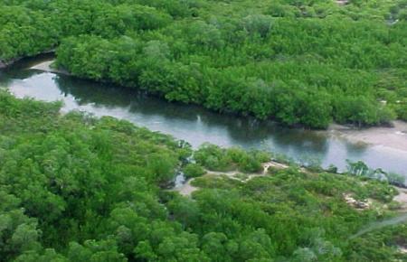 amazonasjpg