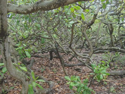 brasil-arboles.jpg